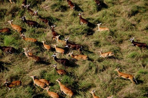 محمية الدندر الطبيعية للحيوانات