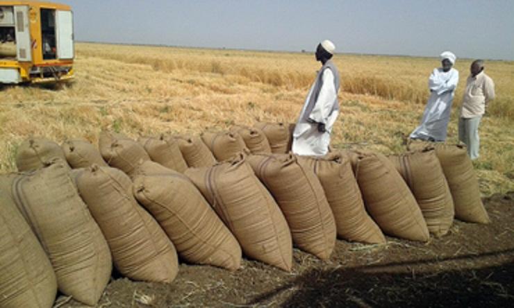 Photo of تمديد استلام القمح من المزارعين بالجزيرة